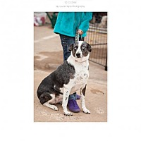 Adopt A Pet :: JoJo - Edmond, OK