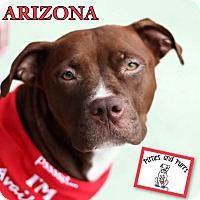 Adopt A Pet :: Arizona - Baltimore, MD