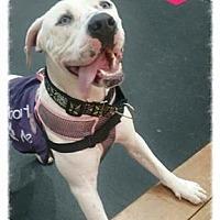 Adopt A Pet :: Shasta - Sacramento, CA