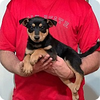 Adopt A Pet :: Molson - South Euclid, OH