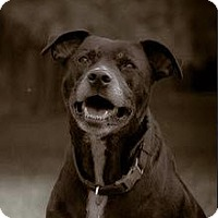 Adopt A Pet :: Mahoney - Nashville, TN