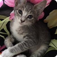 Adopt A Pet :: Niota - Great Neck, NY