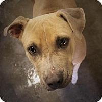Adopt A Pet :: ELLEN - Red Bluff, CA