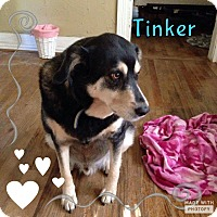 Rottweiler/German Shepherd Dog Mix Dog for adoption in Rowlett, Texas - Tinker