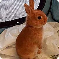 Adopt A Pet :: Praline - Livermore, CA