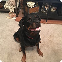 Adopt A Pet :: Klein - Gilbert, AZ