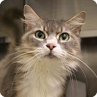 Adopt A Pet :: Genevieve - Sarasota, FL