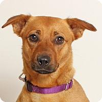 Adopt A Pet :: Crosstrek - Walnut Creek, CA