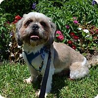 Adopt A Pet :: Leo Worth - Houston, TX