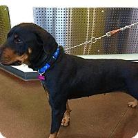 Adopt A Pet :: Georgia - Rexford, NY