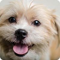 Adopt A Pet :: Rambeau T. Ragsdale D162136: PENDING ADOPTION - Edina, MN