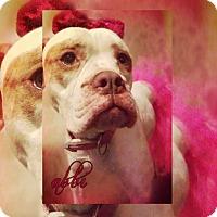 Adopt A Pet :: Abbi - Des Moines, IA