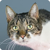 Adopt A Pet :: Blossom - Columbia, IL