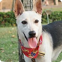 Adopt A Pet :: Vivian - Castro Valley, CA