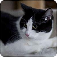 Adopt A Pet :: Tilapia - Chicago, IL