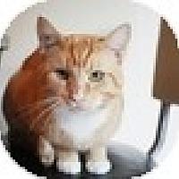 Adopt A Pet :: Humbert AKA PJ - Vancouver, BC