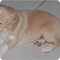 Adopt A Pet :: Kima - Phoenix, AZ