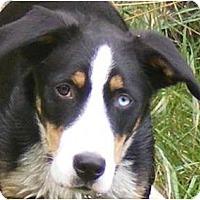 Adopt A Pet :: Helios - Rigaud, QC