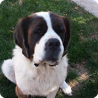 Adopt A Pet :: Keona - Bellflower, CA