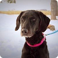 Adopt A Pet :: Skye - Green Bay, WI