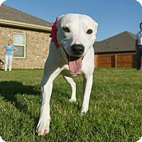 Adopt A Pet :: Alice - Homewood, AL