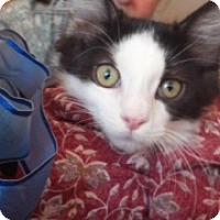 Adopt A Pet :: Stewie - Scottsdale, AZ
