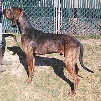 Hound (Unknown Type) Mix Dog for adoption in Seguin, Texas - Charlie Parker