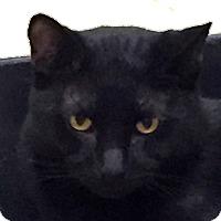 Adopt A Pet :: Gaspar - Winchester, CA