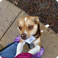 Adopt A Pet :: Beemer - Wyanet, IL