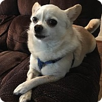 Adopt A Pet :: Peanut - Avon, NY