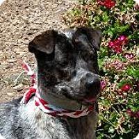 Adopt A Pet :: Olena - Lucasville, OH