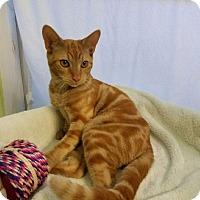 Adopt A Pet :: MSM3 - Alamo, CA