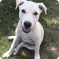 Adopt A Pet :: Eli - Salem, MA