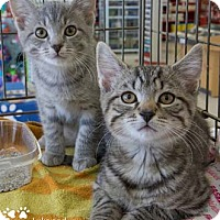 Adopt A Pet :: Luke - Merrifield, VA