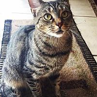 Adopt A Pet :: Tinkerbell - Tampa, FL