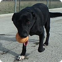 Adopt A Pet :: Godiva - Seguin, TX
