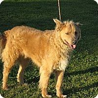 Adopt A Pet :: Jake - Westport, CT