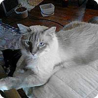 Adopt A Pet :: Bootsie - Denton, TX