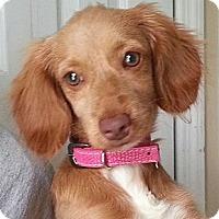 Adopt A Pet :: Jenay - Orlando, FL