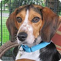 Adopt A Pet :: Juan Pablo - Novi, MI