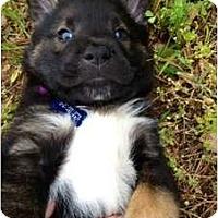 Adopt A Pet :: Friar Tuck - Richmond, VA