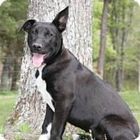 Adopt A Pet :: Olive - Conway, AR