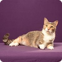 Adopt A Pet :: Dusty Peaches (Adoption Fee Sponsored) - Cary, NC