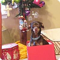 Adopt A Pet :: Noah - McDonough, GA