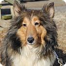 Adopt A Pet :: Matchbox