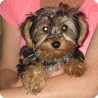 Adopt A Pet :: Ingrid - Greenville, RI