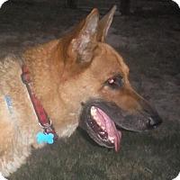 Adopt A Pet :: BOSS - SAN ANTONIO, TX