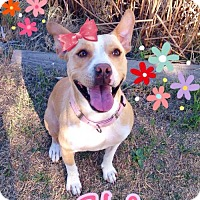 Adopt A Pet :: Helena - Alta Loma, CA