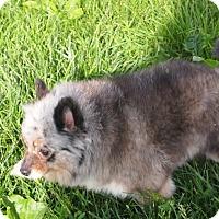 Adopt A Pet :: Judy - Prole, IA