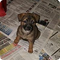 Adopt A Pet :: Erynn - Byhalia, MS